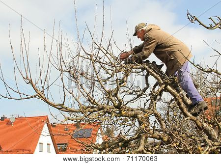 Senior Gardener, Cutting Trees