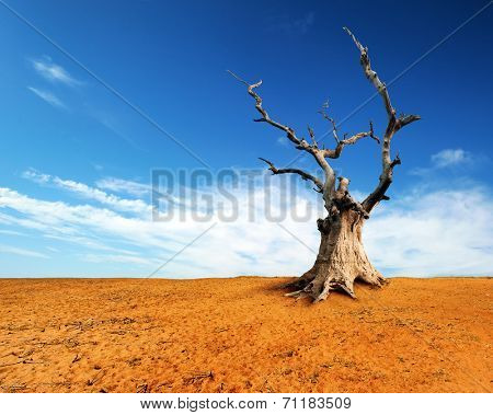 Large old and dead tree on dry desert land with blue sky and white clouds over horizon.