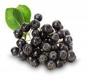 image of aronia  - Branch of black chokeberry  - JPG