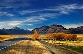 picture of sheep  - Farmland with grazing sheep and Mount Cook on background - JPG