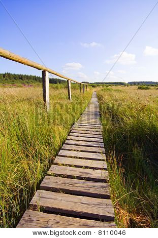 wooden path through marshland
