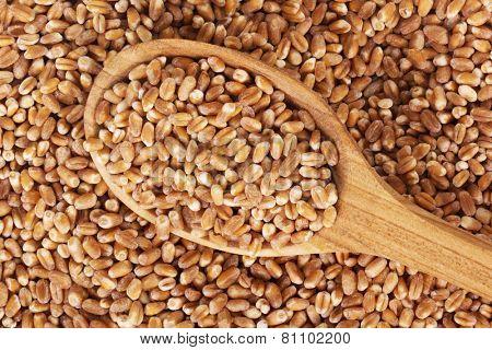 wheat grain on a wooden spoon