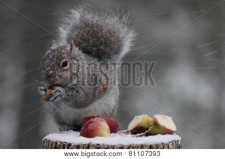 Squirrel in a Blizzard