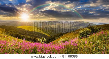 Wild Flowers On The Mountain Top At Sunset