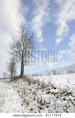 Winter Landscape - Rural Field with Snow