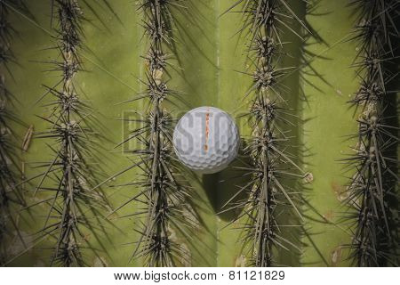 Wild golf shot ball caught in spiky Saguaro cactus tree.