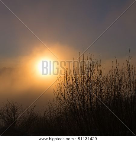 Misty Sunrise Over Alder
