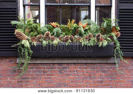 Window Box With Plants
