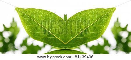 Artistic creative ecological concept with mirrored fresh green leaves forming a symmetrical organic shape depicting eco and bio concepts or the spring and summer seasons