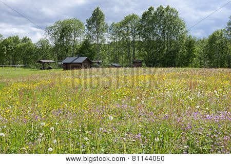 Wildflowers on a summer meadow.