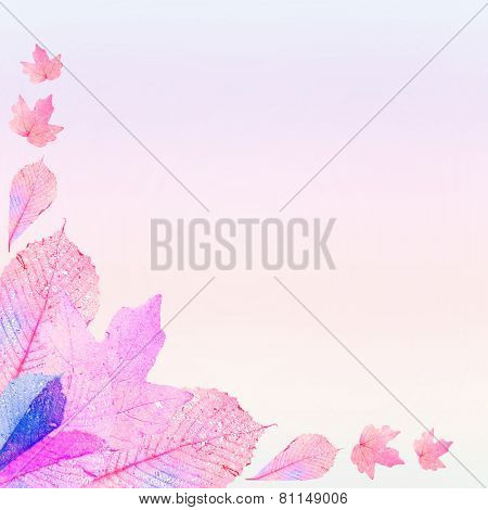 Delicate colored leaves shaped as frame with space for your text