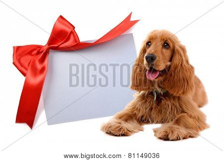 Beautiful cocker spaniel with greeting card, isolated on white