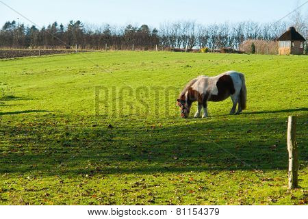 Grazing Horse In A Farm