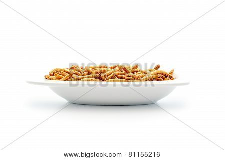 Healthy Mealworms On Small Plate