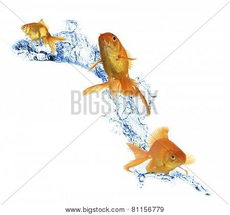 Goldfish in water splashes isolated on white