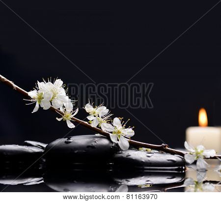 Still life with cherry blossom with candle on black stones