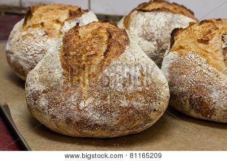 Bread On Baking Sheet