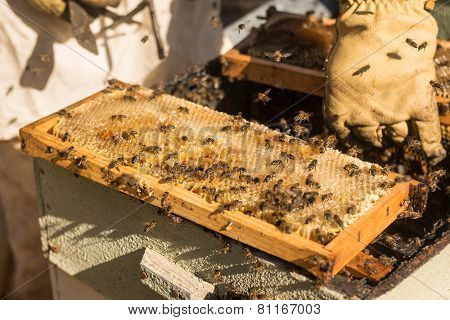 Traditional honey harvesting in a spring morning, Algarve, Portugal, Europe