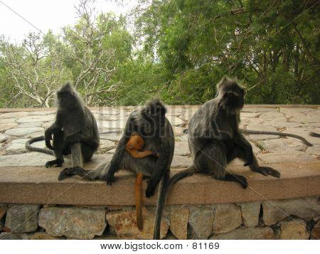 Monkey Troop