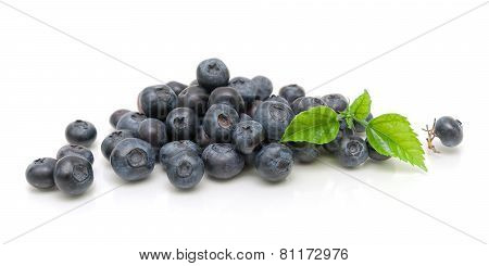Ripe Blueberries Isolated On White Background Close-up