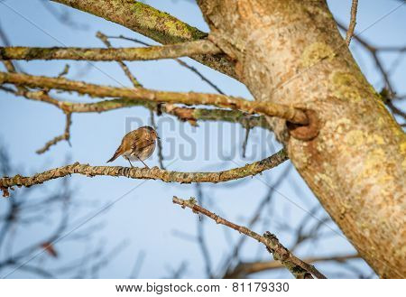 Bird On A Twig