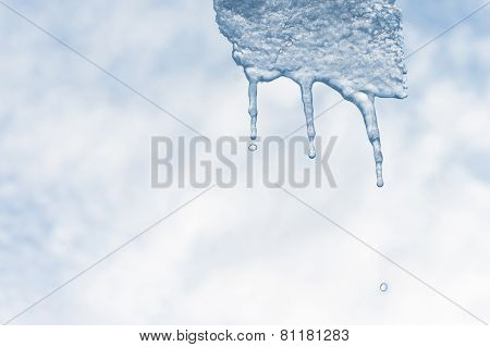 Melting Icicle With Waterdrops