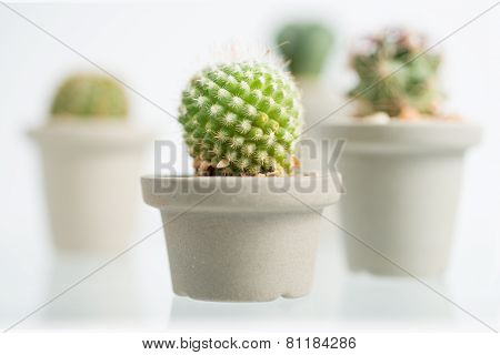 Collage Of Various Cactus In Front Of White Background
