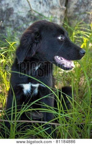 Black puppy in grass