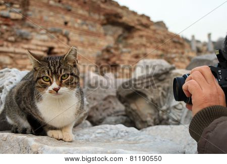 Cat and photographer.