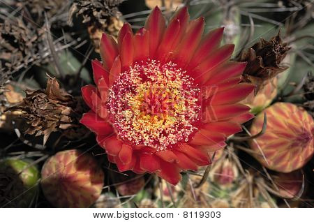 Cactus are unusual and distinctive plants which