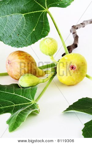 Ripe Figs On Tree