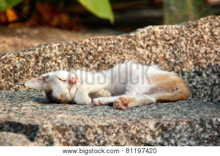 Cat Baby Kitten Sleeping On A Stone