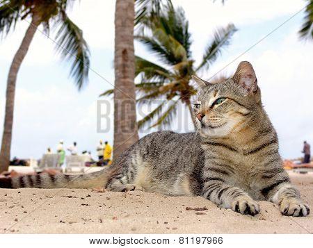 Cat Relaxing On The Beach Kenia