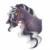 image of bridle  - Picture of a horse - JPG