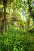 stock photo of coffin  - The traditional burial site of Pana deep into the jungle - JPG