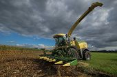 picture of corn  - Germany  - JPG