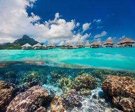 stock photo of french polynesia  - Beautiful coral garden under over the water bungalows in French Polynesia - JPG