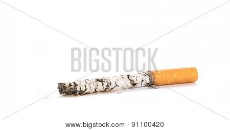 Cigarette butt with ash isolated on white background