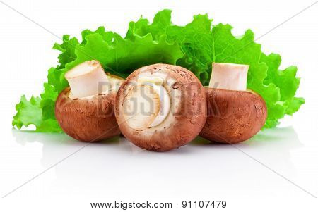 Three Mushrooms And Green Leaves Lettuce Isolated On White Background