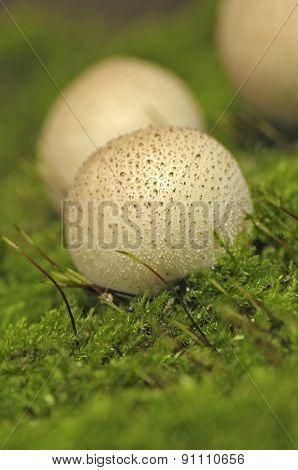 mushroom raincoat