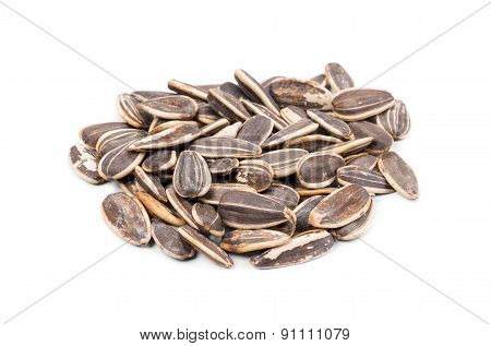 Bunch of sunflower seeds close up.