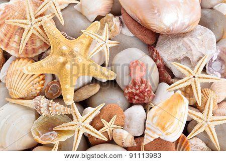 Seashells Background.