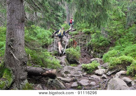 Tatry Hiking