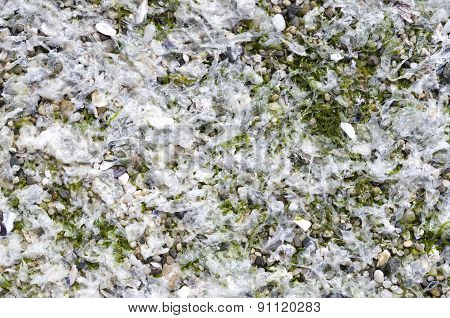 White Wet Algae On Sunny Beachx