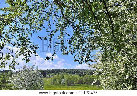 Spring Village Landsckape