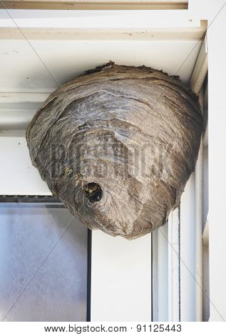 Bee Hive Nest Hanging From House