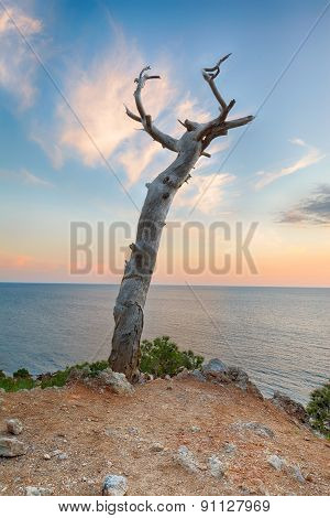 Abstract seascape. Dry snag in the cliff