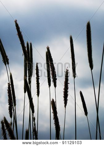 Grass On Sky