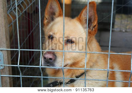 Dog In The Animal Shelter