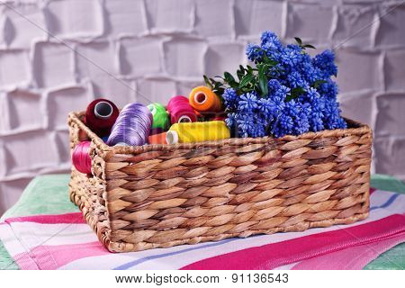 Beautiful muscari - hyacinth in wicker basket with spools of thread on wall background